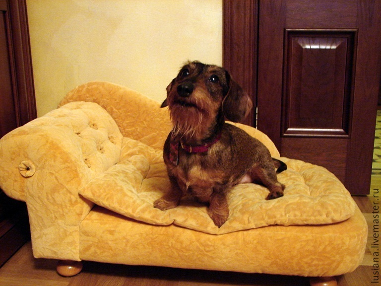 Couch for dog or cat