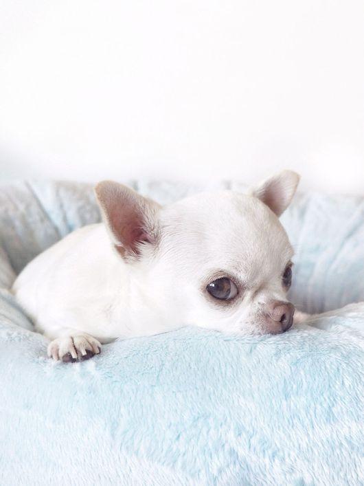 Аксессуары для собак, ручной работы. Ярмарка Мастеров - ручная работа. Купить Ватрушка Аква. Handmade. Кроватка для собак, нежно-голубой