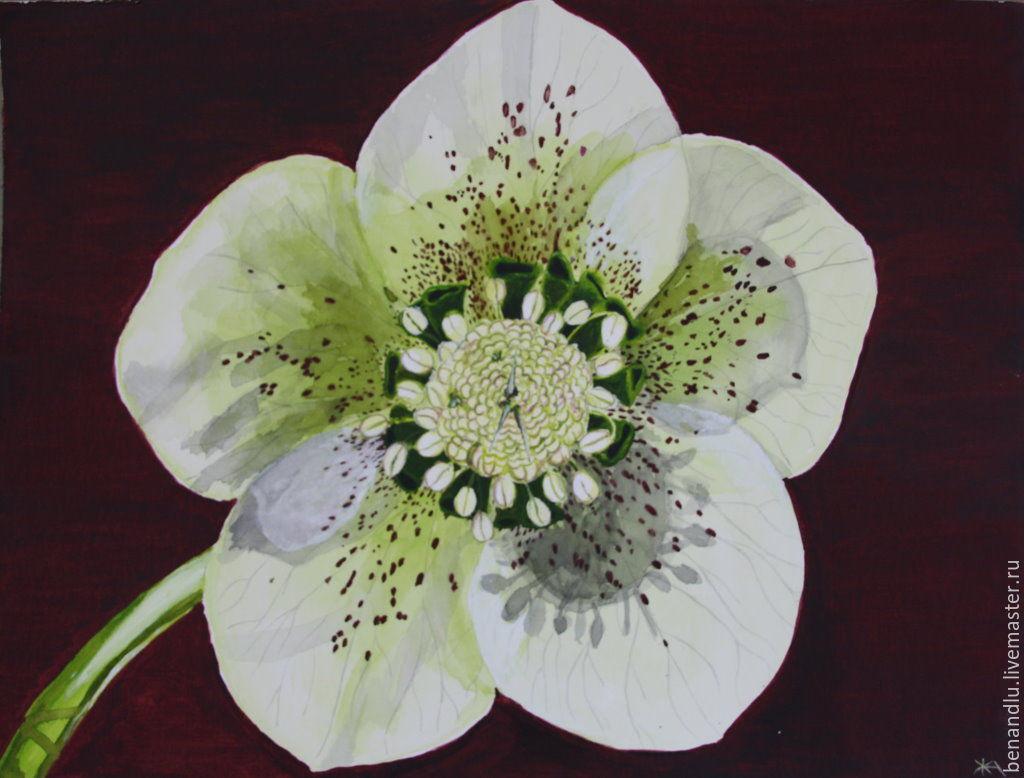 Морозник цветы купить в интернет магазине домашние цветы купить донецк
