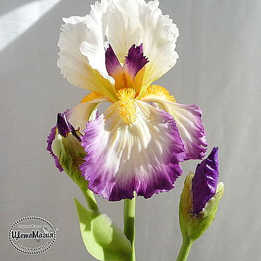 Flowers and floristry handmade. Livemaster - original item Iris polymer clay. Handmade.