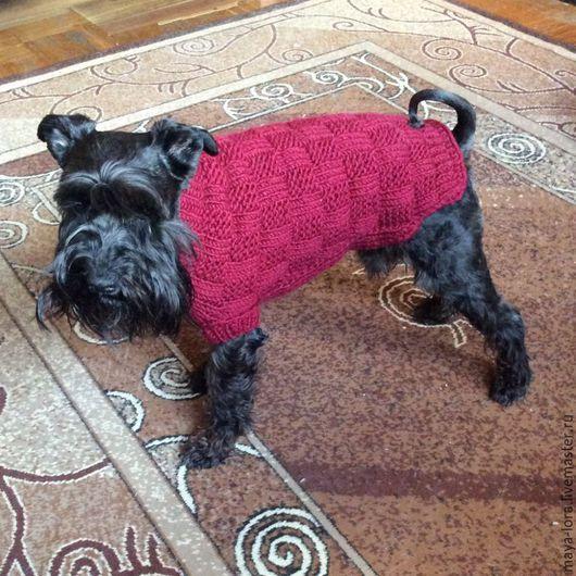 Одежда для собак, ручной работы. Ярмарка Мастеров - ручная работа. Купить Одежда для собак. Попона Для души. Handmade. Бордовый