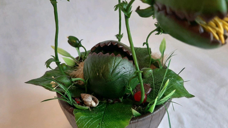 Тентакула ядовитая, Растения, Козьмодемьянск,  Фото №1