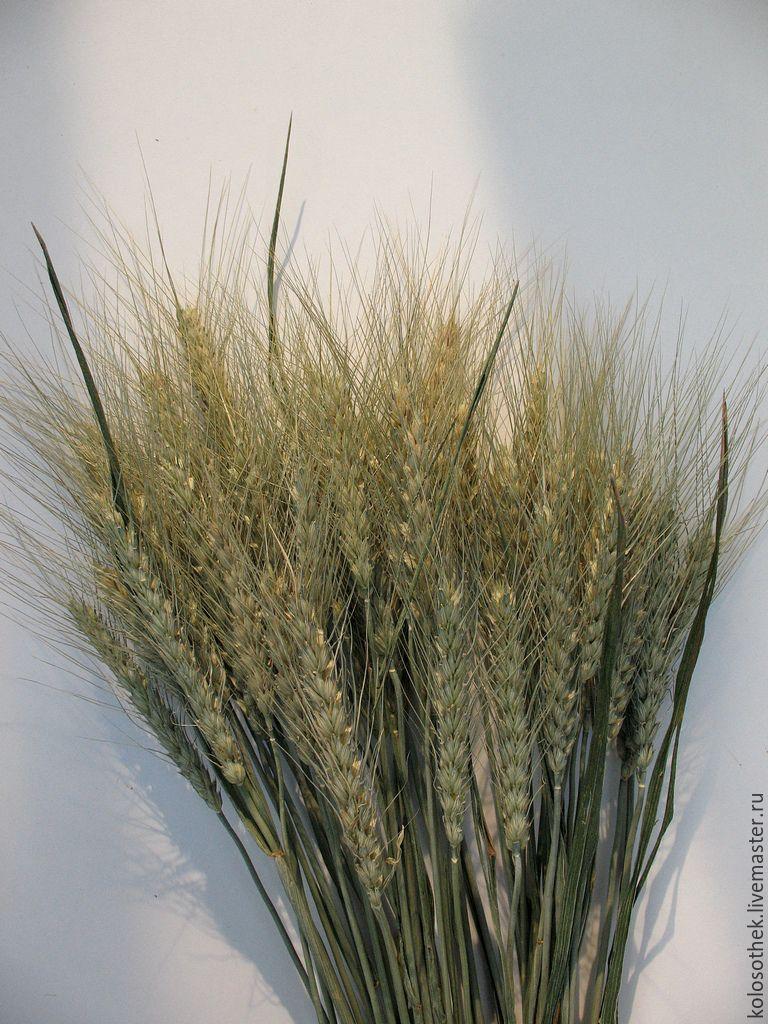 Букет из колосьев пшеницы своими руками 573