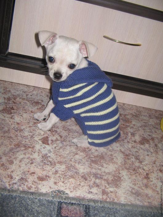 Одежда для собак, ручной работы. Ярмарка Мастеров - ручная работа. Купить Одежда для собак. Handmade. Голубой, маленькая собачка