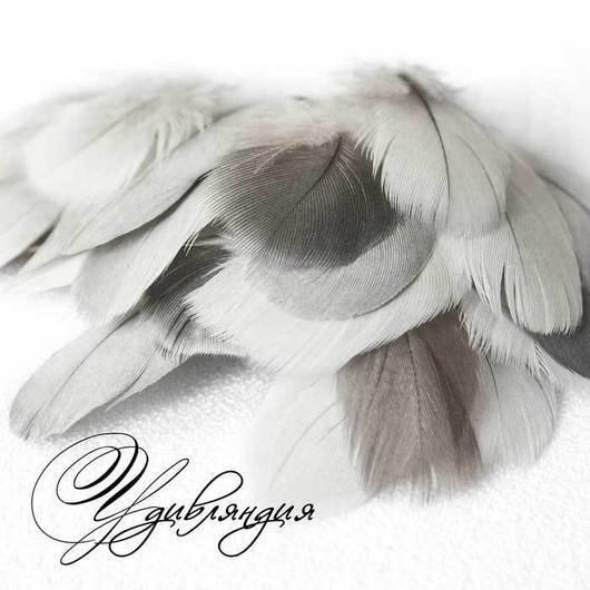 Другие виды рукоделия ручной работы. Ярмарка Мастеров - ручная работа. Купить Перо попугая натуральное, не окрашенное №102.. Handmade.