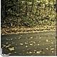 """Обложки ручной работы. обложка """"Машина в лесу"""" (кожа). Анастасия (sollisy). Ярмарка Мастеров. Обложка, осень"""