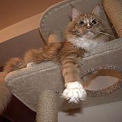 Для домашних животных, ручной работы. Ярмарка Мастеров - ручная работа Домик подходит крупной кошке. Handmade.