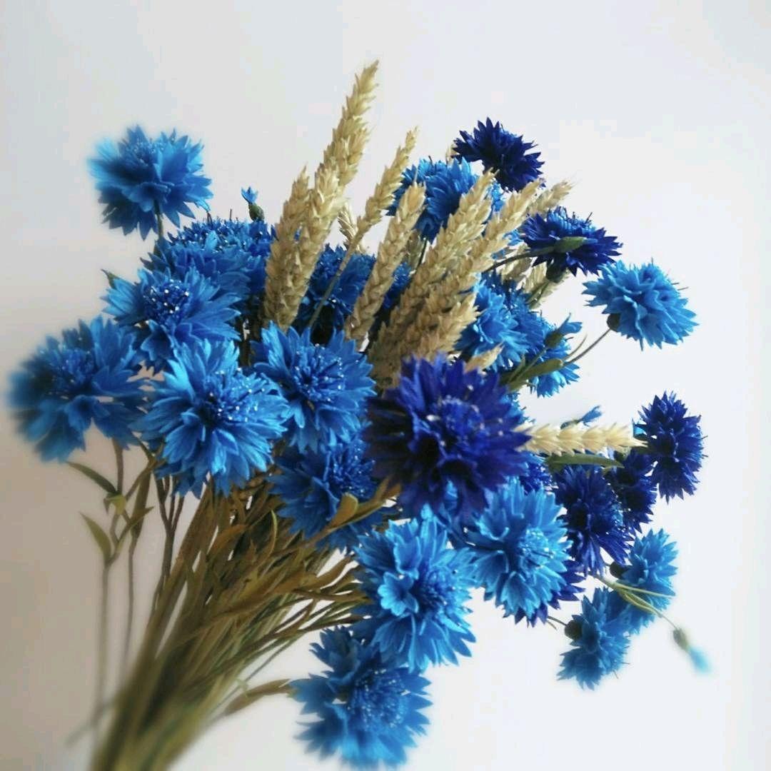 вид картинки букетов цветов из васильков этого