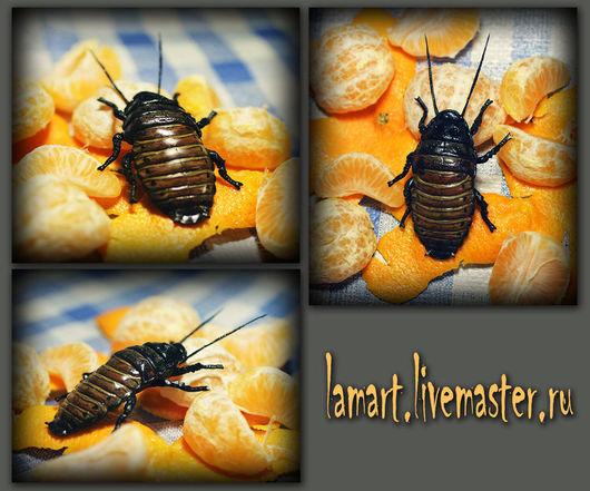 Магниты ручной работы. Ярмарка Мастеров - ручная работа. Купить Насекомые на холодильник. Handmade. Насекомые, жуки, полимерная глина