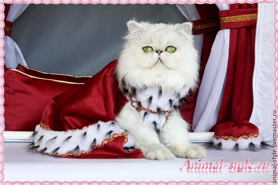 `Royal lady` exhibition outfit for cats