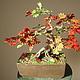 Бонсай ручной работы. Ярмарка Мастеров - ручная работа. Купить Бонсай Японский клен в стиле Нэагари («Дерево, стоящее на корнях»). Handmade.