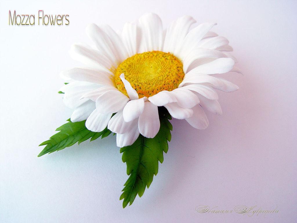 Купить цветы в совхозе цветы