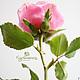 Цветы ручной работы. Роза из полимерной глины. Холодный фарфор.. КурОлеська (Богданович Олеся). Ярмарка Мастеров. Розы, интерьерная композиция