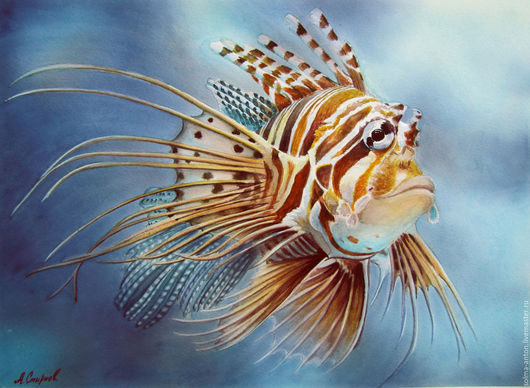 """Животные ручной работы. Ярмарка Мастеров - ручная работа. Купить Акварель """"Крылатка"""". Handmade. Оранжевый, рыба, морская тема, акварель"""
