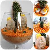 Цветы и флористика ручной работы. Ярмарка Мастеров - ручная работа Флорариум в бокале из кактусов. Handmade.