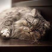 Куклы и игрушки handmade. Livemaster - original item Persian cat with multicolored eyes. Realistic toy. Handmade.