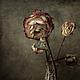 Фотокартины ручной работы. Ярмарка Мастеров - ручная работа. Купить натюрморт Настроение - Грусть (работа из серии гербарий). Handmade. Бордовый
