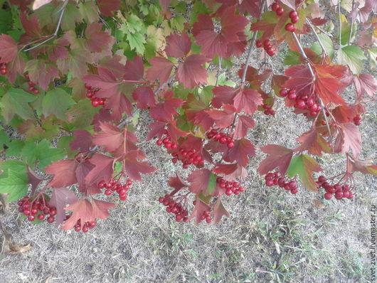 Фотокартина `Калина осень встречает` (вариант № 1)