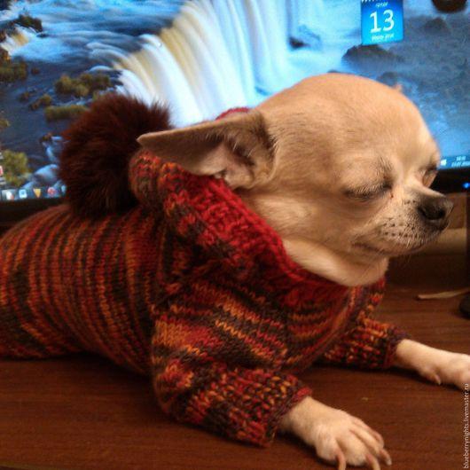 """Одежда для собак, ручной работы. Ярмарка Мастеров - ручная работа. Купить Теплый свитерок с капюшоном """" Шарм"""". Handmade. Комбинированный"""