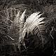 Черно-белая фотокартина - Триптих - Природа - Лист Папоротника - Лес