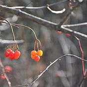 Картины и панно handmade. Livemaster - original item A parting gift of autumn, from a series of photographs. Handmade.