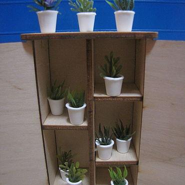 Мини растения в горшочках в ассортименте