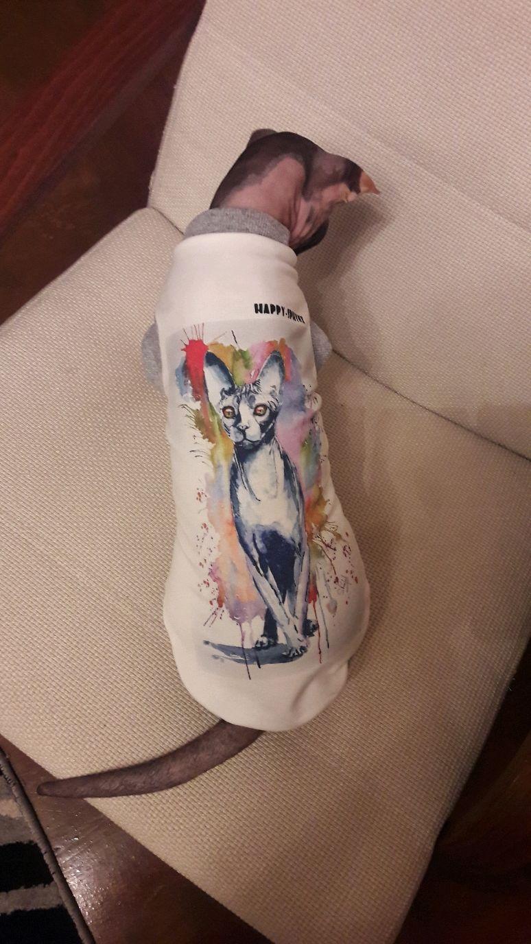 "Одежда для кошек  Майка ""Сфинкс"", Одежда для кошек, Бийск, Фото №1"
