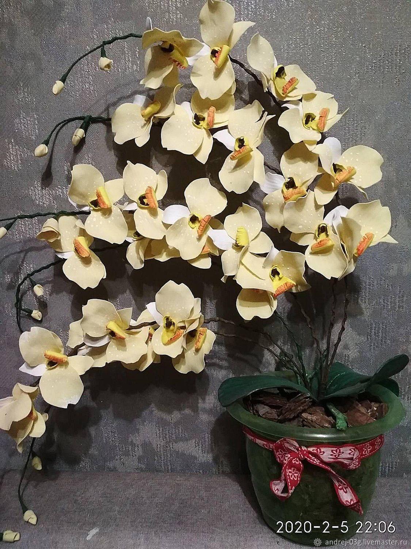 Цветы в горшке, Цветы, Березино,  Фото №1