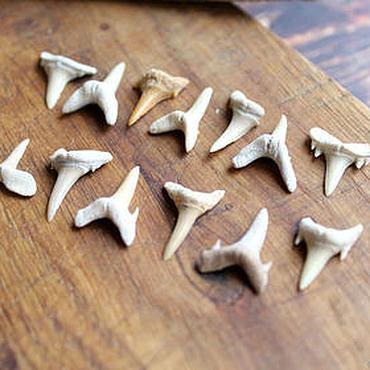 Русский стиль ручной работы. Ярмарка Мастеров - ручная работа Окаменелый зуб акулы 10-23 мм. Handmade.