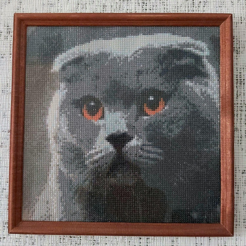 Алмазная мозаика Шотландский барон кот, Картины, Белгород,  Фото №1