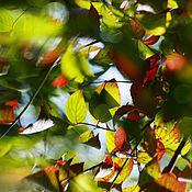 Картины и панно ручной работы. Ярмарка Мастеров - ручная работа Фотография для интерьера Природа Лето «Акварели Солнца». Emerald Green. Handmade.