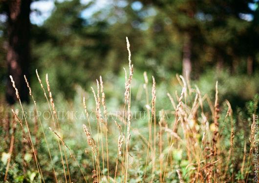 """Фотокартины ручной работы. Ярмарка Мастеров - ручная работа. Купить Фотокартина """"Колосок"""". Handmade. Фотография, природа, трава, желтый, бумага"""