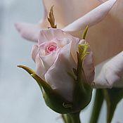 Цветы и флористика ручной работы. Ярмарка Мастеров - ручная работа роза с бутонами. флористическая полимерная глина. Handmade.