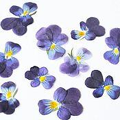 Материалы для творчества handmade. Livemaster - original item Dried flower of the garden violet(miniature pansies)10 pcs. Handmade.