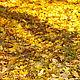 Окутывающие и теплые ароматы, набор пробников натуральных духов. Духи. Anna Zworykina Рerfumes. Ярмарка Мастеров.  Фото №4