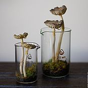 Для дома и интерьера ручной работы. Ярмарка Мастеров - ручная работа Грибные экосистемы (флорариумы) искусственные. Handmade.