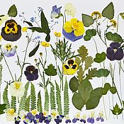 Материалы для творчества handmade. Livemaster - original item A large set of dried flowers.(85 elements!). Handmade.
