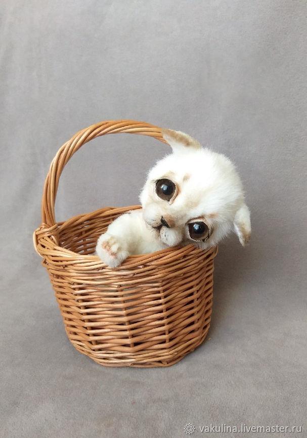 Teddy Animals: Cabin boy's puppy, Teddy Toys, Chelyabinsk,  Фото №1