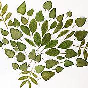Материалы для творчества handmade. Livemaster - original item Dried,small resin leaves (70pcs). Handmade.