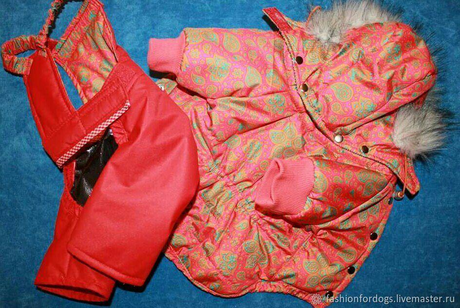 Куртка со штанишками Снежинки на красном, Одежда для питомцев, Долгопрудный,  Фото №1