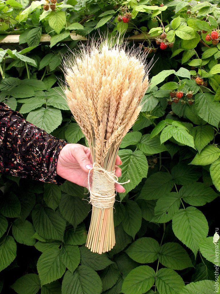 Букет из колосьев пшеницы своими руками 696