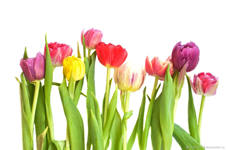 "Фотография для печати ""Тюльпаны"", Фотографии, Москва,  Фото №1"