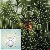 Материалы для творчества handmade. Livemaster - original item Spider Mold (3 sizes). Handmade.