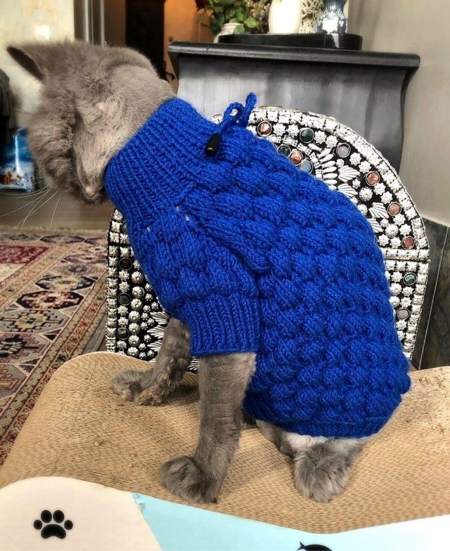 Тёплый свитер для кошек от Элен О, Одежда для кошек, Санкт-Петербург, Фото №1