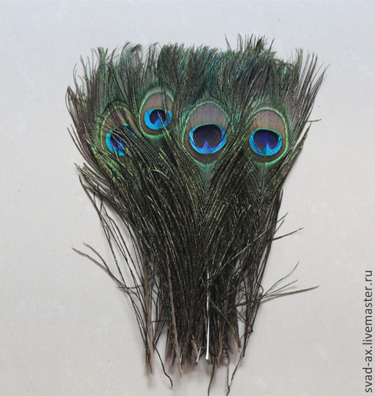 Другие виды рукоделия ручной работы. Ярмарка Мастеров - ручная работа. Купить Перо павлина. Handmade. Перья, перья птиц
