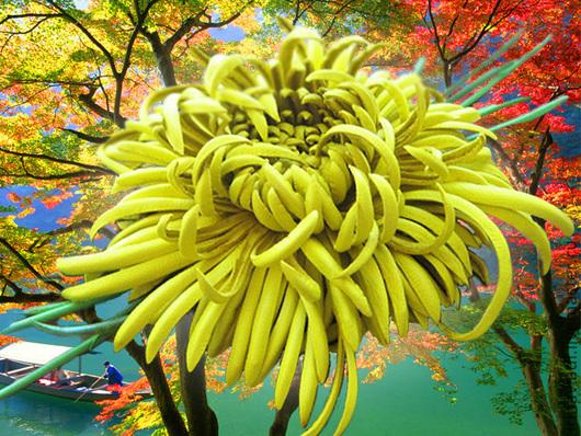 цветы из кожи, кожаный цветок брошь, кожаная заколка с цветком, желтая хризантема из кожи, кожаная хризантема брошь,  ободок с цветком, хризантема желтая заколка для волос,украшения из кожи, цветы руч