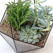 Цветы и флористика handmade. Livemaster - original item The Floriana Icosahedron with cacti and succulents. Handmade.