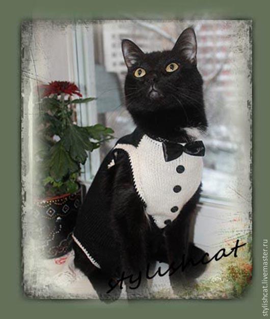 Одежда для кошек, ручной работы. Ярмарка Мастеров - ручная работа. Купить Одежда для кошек. Handmade. Одежда для сфинкса, донской сфинкс