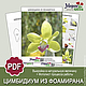 Выкройка орхидеи Цимбидиум из фоамирана