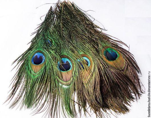 Другие виды рукоделия ручной работы. Ярмарка Мастеров - ручная работа. Купить Перья павлина. Handmade. Разноцветный, перья птиц